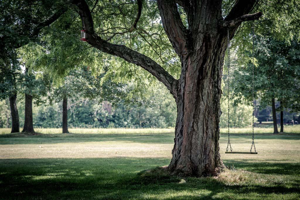 Traitement arbres et jardins