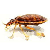 Quelles sont les espèces invasives contre lesquelles nous pouvons lutter ?