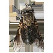 Comment lutter contre les insectes piqueurs ?