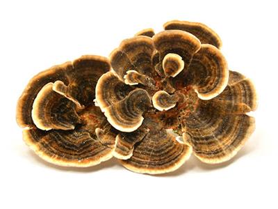 AGILITY traite tous les champignons lignivores