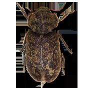 AGILITY traite les bois contre tous les insectes xylophages